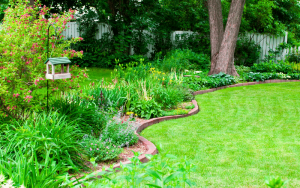 How to Maintain Your Grass